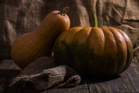 flattened: Still life of two whole ripe orange long pear shaped and round flattened with green formless blotch pumpkins decorated with burlap on wooden table, horizontal picture