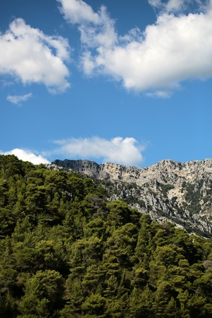 elevation: Photo long shot of evergreen tall trees on beautiful heads tops of mountains with cliffs natural elevation of earth surface on bright blue sky white clouds on landscape background, vertical picture