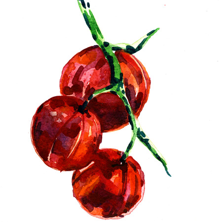 Beautiful watercolor freehand illustration of branch of red ripe tomatoes vegetable on white background print fabric textile kitchen decor hand drawn design Stockfoto