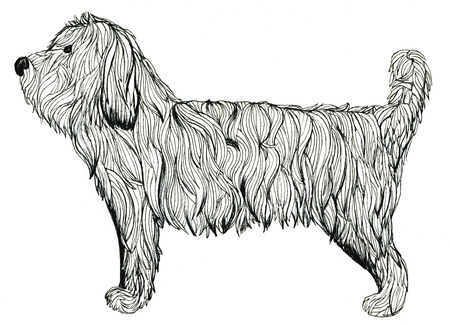 long haired: Illustration of cute shaggy black and white dog animal on white background drawing freehand watercolor technics undulated lines beautiful artwork design of greeting card wallpaper poster