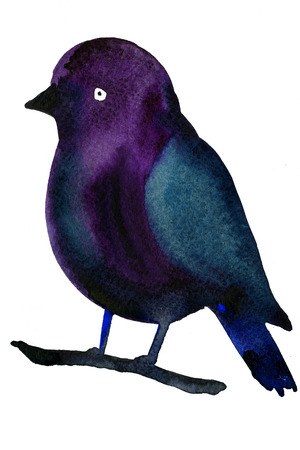 technics: Freehand watercolor illustration of beautiful colorful dark blue and purple bird sitting on branch on white background drawing by hand artistic wallpaper greeting poster congratulation fabric print