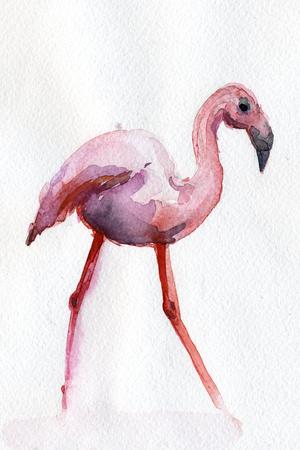 flamenco ave: Pájaro hermoso flamenco rosado en el fondo de la acuarela blanco ilustración dibujados a mano decoración de diseño artístico impresión de la tela postal de la tarjeta de felicitación del papel pintado del cartel