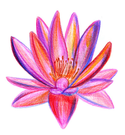pleasing: Closeup pleasing multicolored pencil drawing crayon hand drawn of lotus on texture paper over white background, square picture
