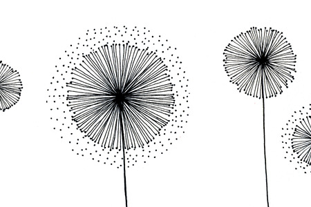 pleasing: Closeup pleasing artistic black and white flowers blowballs surreal and fantasy art pen-and-ink drawing freehand sketch texture paper over white background, horizontal picture Stock Photo