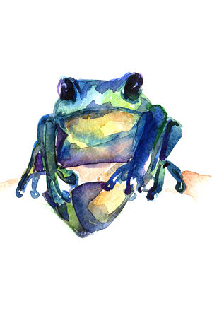 dabs: Closeup pleasing artistic water-color aquarelle freehand sketch rough drawing of frog guardant water paint strokes and dabs texture paper over white background, vertical picture