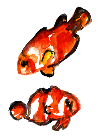 dabs: Closeup pleasing artistic water-color aquarelle freehand sketch rough drawing hand drawn pair of goldfish guardant water paint strokes dabs texture paper on white background, vertical picture