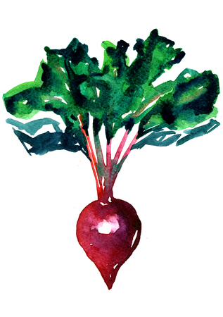 Closeup pleasing artistic water-color aquarelle freehand sketch rough drawing hand drawn of green-headed beet water paint strokes and dabs texture paper on white background, vertical picture Banque d'images
