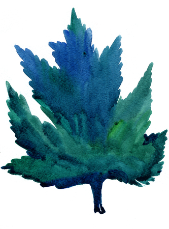 dabs: Closeup pleasing artistic water-color aquarelle freehand rough drawing hand drawn of greening maple leaf water paint strokes and dabs texture paper on white background, vertical picture