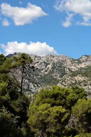 plan éloigné: Photo long shot of evergreen tall trees on beautiful heads tops of mountains with cliffs natural elevation of earth surface on bright blue sky white clouds on landscape background, vertical picture