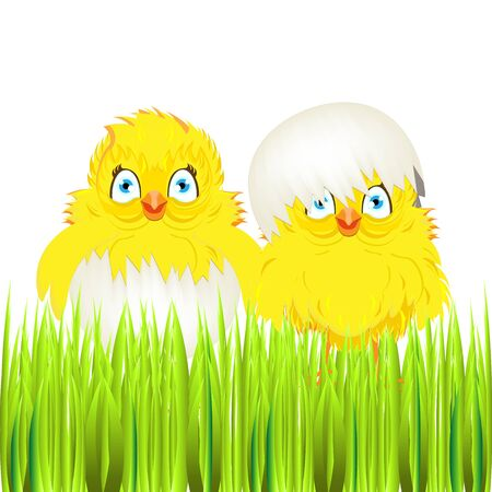easter sunday: Bright color vector graphic illustration of happy easter sunday day with traditional spring holiday symbol of cute yellow chicken in shell on white background Illustration