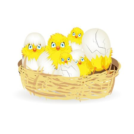 chick: Bright color vector graphic illustration of happy easter sunday day with traditional spring holiday symbol of cute yellow chicken in shell on white background Illustration