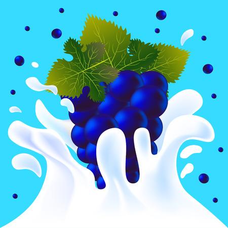 yoghurt: Blue vector fresh tasty grapes falling in white milk yoghurt splash on blue background of vitamine fruit berry