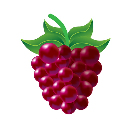vitamine: One purple vector fresh tasty raspberry with green leaves on white background of vitamine fruit berry Illustration