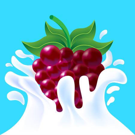 yoghurt: Purple vector fresh tasty raspberry falling in white milk yoghurt splash on blue background of vitamine fruit berry Illustration