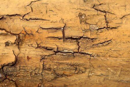 protects: Tree bark texture light brown outer layer surface cork protects plant on woody background