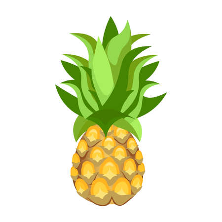 pine apple: Pine apple isolated on white background. Vector