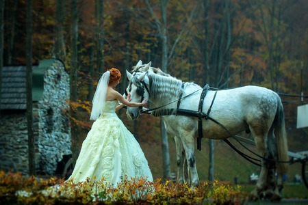 cinderella dress: Young romantic beautiful bride in white wedding dress as cinderella standing near horses with carriage in deep forest outdoor on natural background, horizontal picture