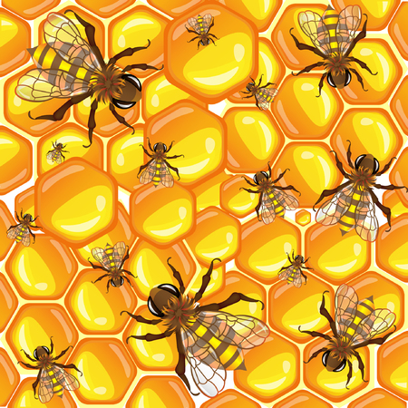 combs: Bright yellow vector graphic illustration of many bees on sweet honey combs on white background