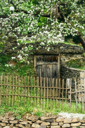 picket green: White blooming flowers growing near wooden picket fence in traditional garden with door and stony decoration on green grass outdoor