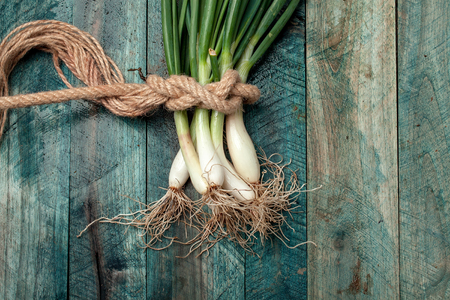 roped: Scallions fresh spring onions roped in bunch on blue wooden table background Stock Photo