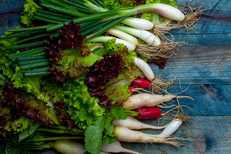 spring onions: Spring onions red white radishes and green salad leaves fresh wet on wooden table background