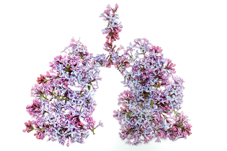 Flowers of lilac arranged in shape of human lungs purple color isolated on white background, asthma and allergy concept