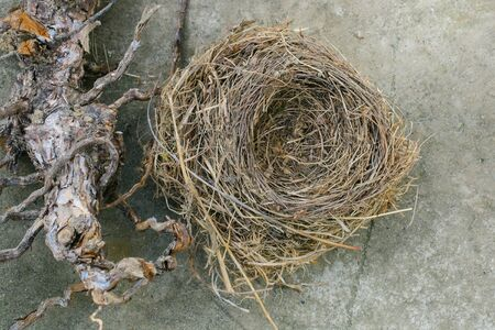 straw twig: Birds nest and massive branch Stock Photo