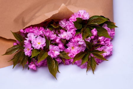 packing paper: Pink cherry sakura blossom flowers with green leaves in brown packing paper isolated on white background Stock Photo