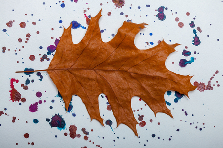 applique: autumn seasonal dried oak leaf brown color lying on white background with colorful watercolor stains for applique Stock Photo