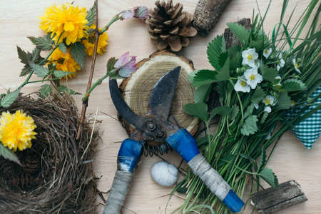 secateur: gardening set of pruner stump shell pinecone nest leaves and flowers on wooden background