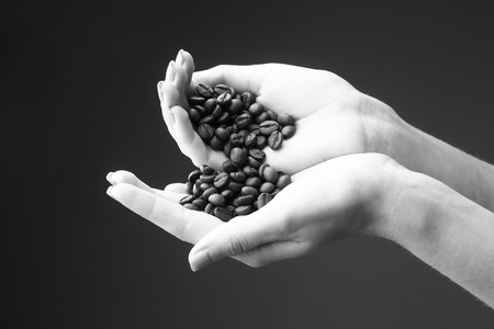 female hands with soft tender skin and manicure holding fresh or fried aroma coffee beans on studio background, black and white Stock Photo