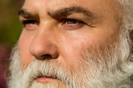 hairy male: male eye with bright striped lens and hairy eyebrow of old bearded man with wrinkled skin and long beard on serious face sunny day outdoor, closeup