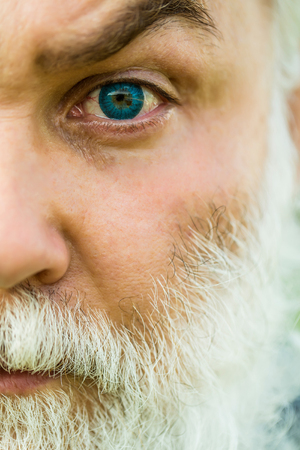 hairy male: male eye with bright blue lens and hairy eyebrow of old bearded man with wrinkled skin and long beard on serious face, closeup