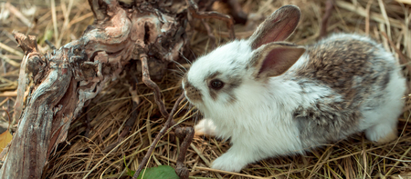 exposed: Cute little bunny rabbit and tree exposed roots on hay on natural background