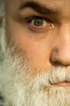 hairy closeup: male eye with bright striped lens and hairy eyebrow of old bearded man with wrinkled skin and long beard on serious face, closeup