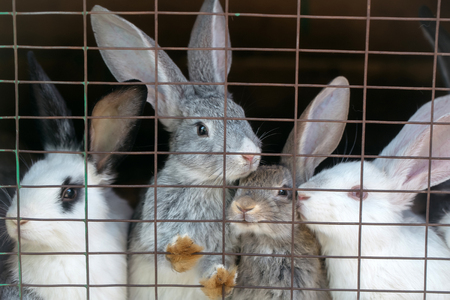 wire mesh: Cute rabbits grey and white fluffy bunnies sit in cage with wire mesh on dark background