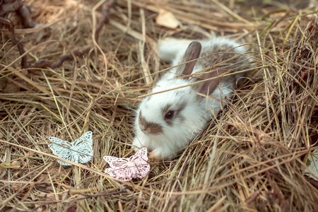 butterfly rabbit: Cute little bunny rabbit and beautiful butterfly decorative artificial plastic pins on hay on natural background