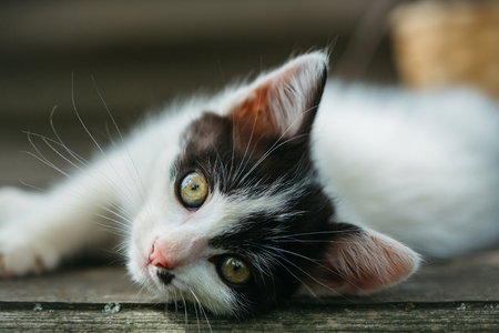 spotted fur: cute small lovely curious baby cat or kitten with white color spotted fur and whiskers on wooden board outdoor
