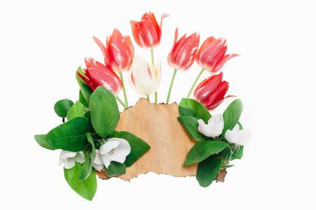 scorched: seasonal tulip flower bouquet red color on green stem with scorched paper and green leaves in spring isolated on white background, closeup, copy space Stock Photo