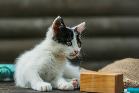 spotted fur: cute small lovely curious baby cat or kitten with white color spotted fur and whiskers playing with wood cube on wooden background outdoor Stock Photo