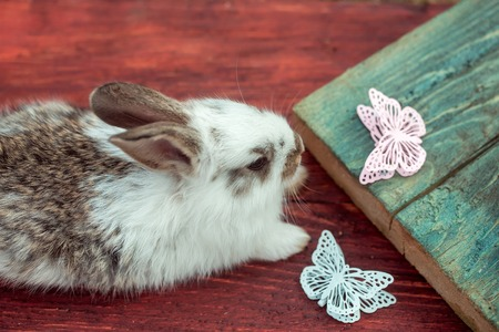 butterfly rabbit: Cute little bunny rabbit with beautiful butterfly decorative artificial plastic pins on wooden background