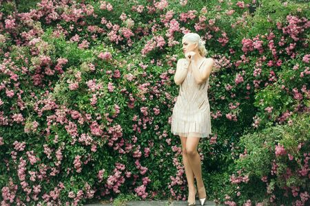 rose bush: Young woman blonde with pretty face and splendid legs in beautiful vogue creamy dress posing on rose bush in pink blossom green leaves background