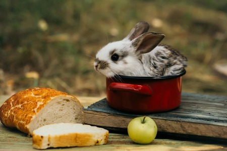 rabit: Little bunny looks for a tasty meal. Cute baby rabit in small red pot among the food