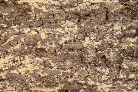 bark texture: Tree bark texture light brown outer layer surface cork protects plant on woody background