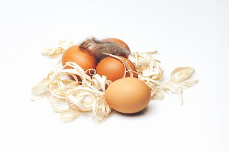 excelsior: Brown domestic eggs with beautiful feather and excelsior laying on white background closeup studio Stock Photo