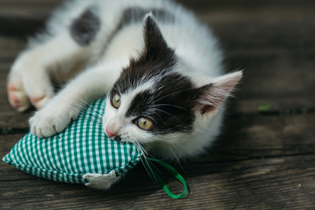 whiskers: cute small lovely curious baby cat or kitten with white color spotted fur and whiskers playing with heart shape pillow on wooden board outdoor