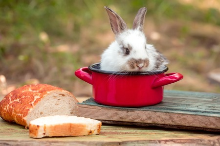 rabit: Cute baby rabit in small red pot among the food. Little bunny looks for a tasty meal Stock Photo