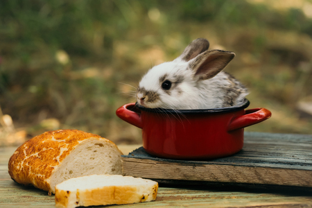 rabit: Cute baby rabit in small red pot among the food