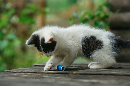 spotted fur: cute small lovely curious baby cat or kitten with white color spotted fur and whiskers playing with blue thread on wooden board outdoor Stock Photo