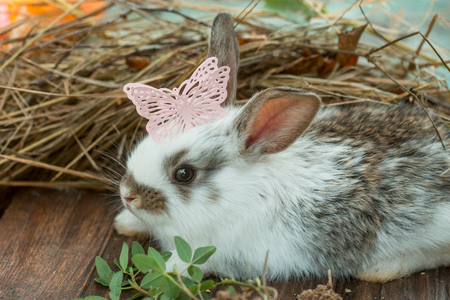 spotted fur: Cute little hare with soft spotted fur long ears and beautiful butterfly plastic decorative pin on his head near green grass on natural hay background Stock Photo